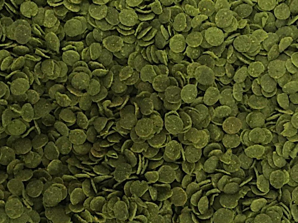VEGGİE CHİPS 2400GR GREEN ALGAE CLEAR IMMUNE PROTECT OMEGA-3 PRO CRİSPS KOVA BALIK YEMİ